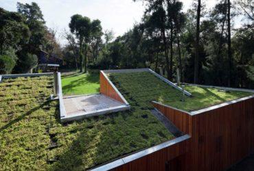 Трава на крыше аргентинского дома