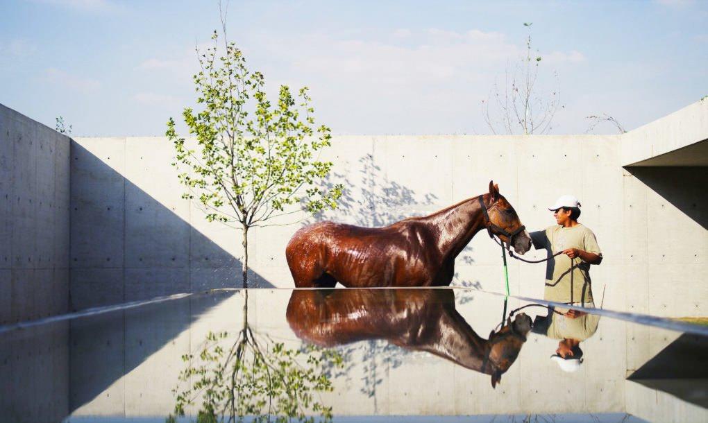 Конь в конюшне - Аргентина | Зеленые крыши