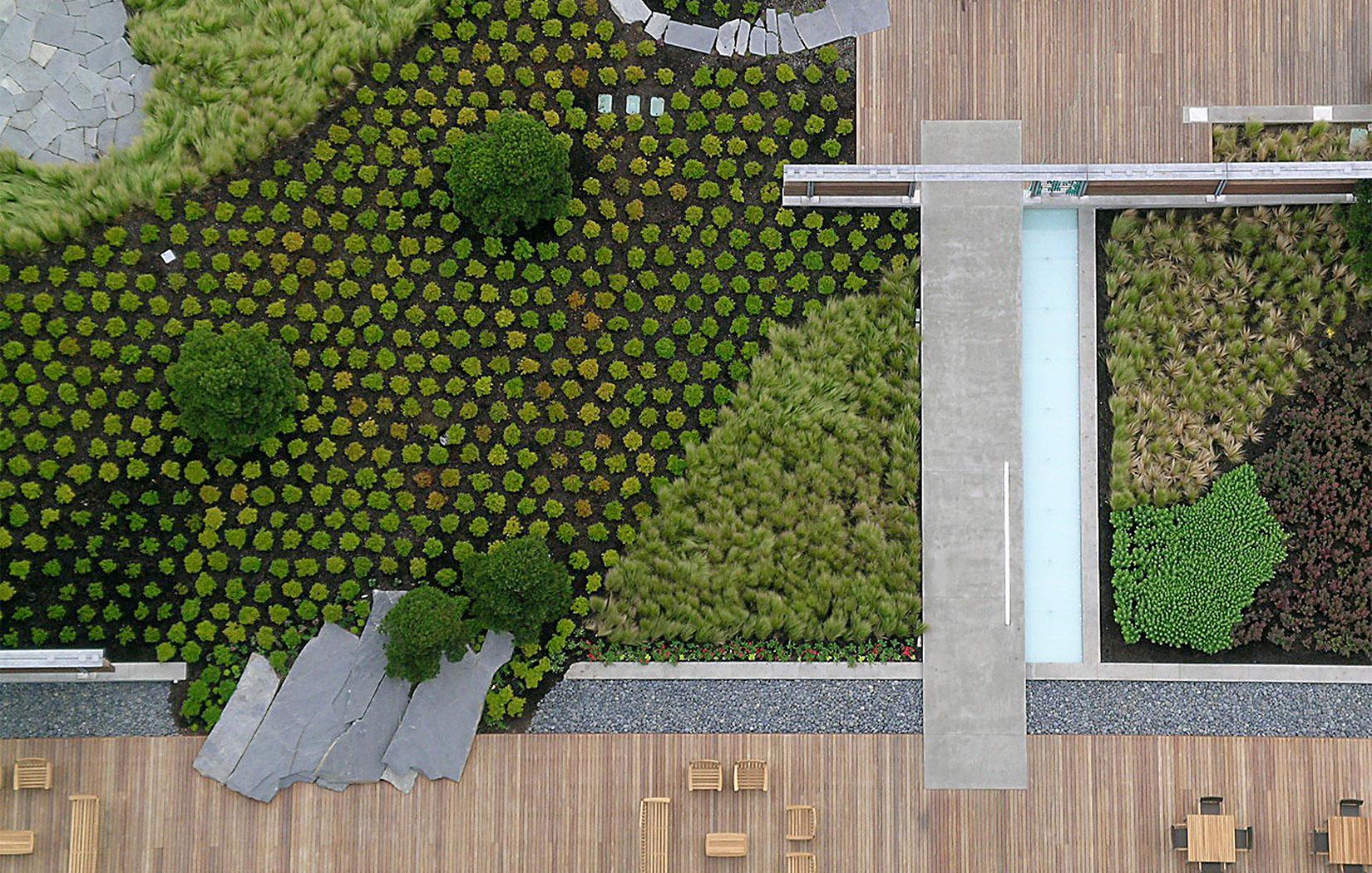 вид сада на крыше в Сиэтле | Зеленые крыши